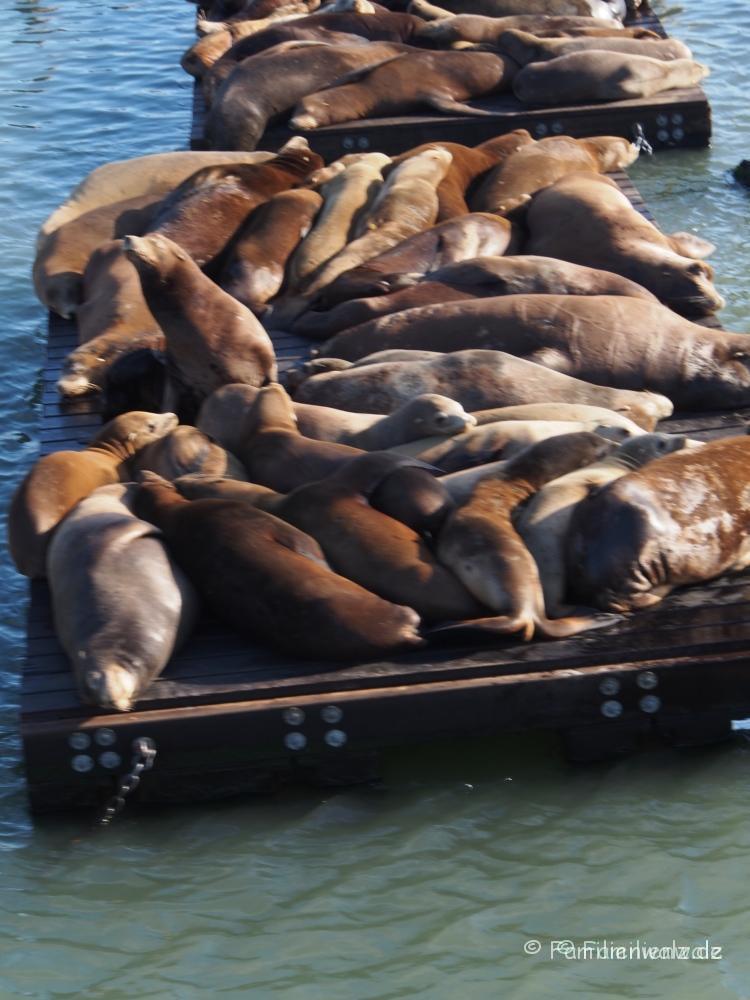 Familienwalz - Was ist Glück? - In San Francisco am Pier 39