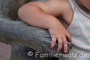 Elefanten, Strand und wilde Affen - Affenfreundschaft